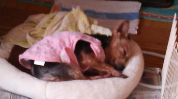 dog-1_convert_20140201095804.jpg