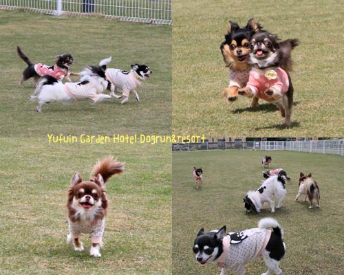 dogrun2_20130423215334.jpg