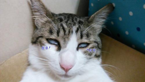 こうめ323