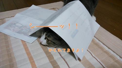 こうめ325