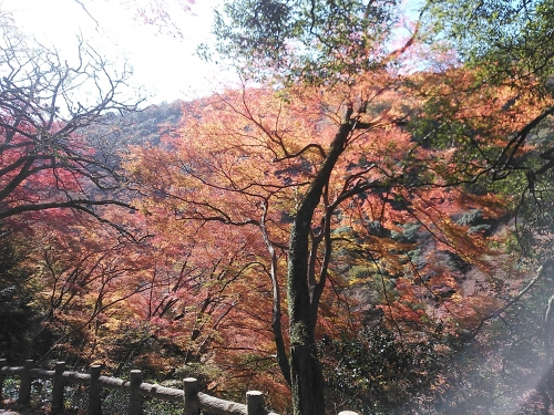 箕面の滝9