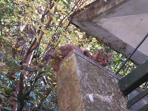 箕面の滝12