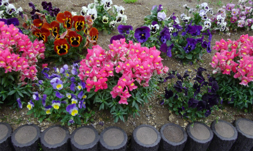 セミナー会場の花壇