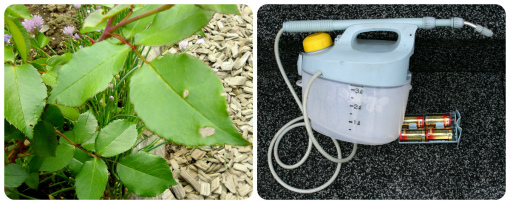 虫の活躍と噴霧器