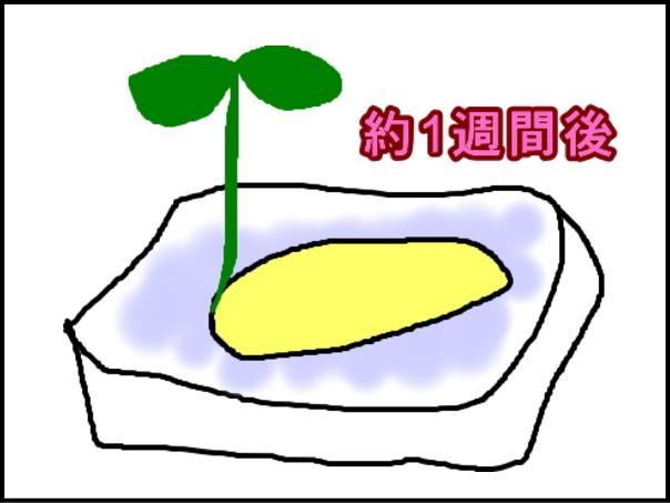 1_20130608010436.jpg