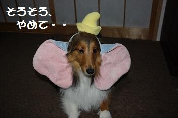 耳ダンボ2