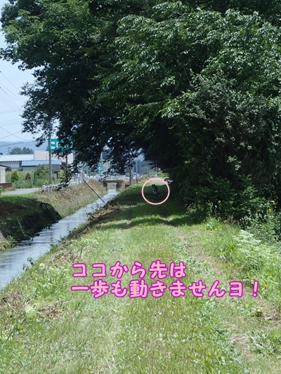 20130729b-17.jpg