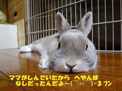 11_20130511032712.jpg