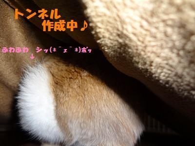 1_20130418010258.jpg