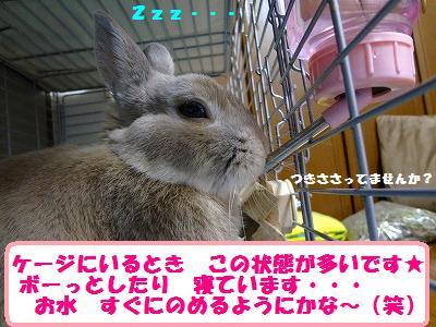 1_20130711034217.jpg