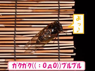 1_201308100255135cc.jpg