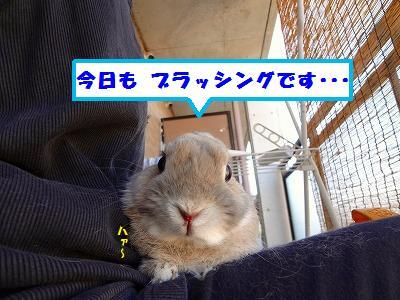 3_20130927223158ebb.jpg