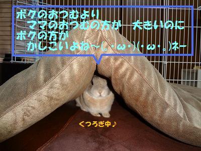 4_20130416020448.jpg