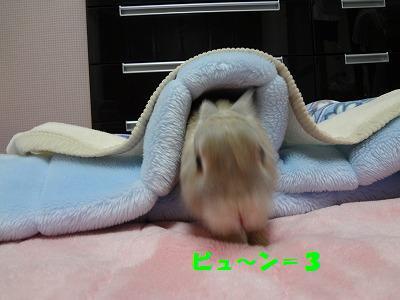4_20130518210520.jpg