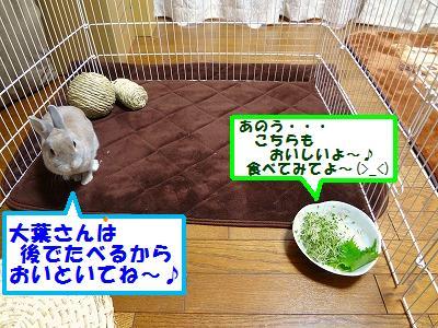 4_20131007032551e59.jpg