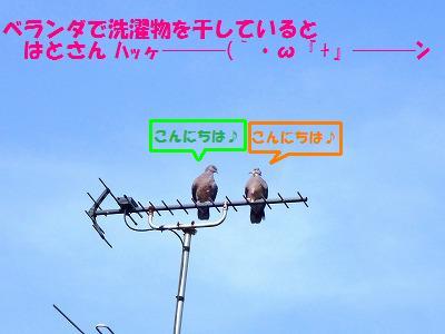 7_20130727225145.jpg