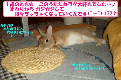 7_20130826034120127.jpg
