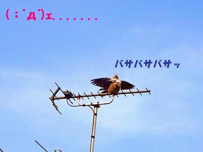 8_20130727225146.jpg