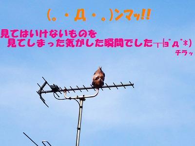 9_20130727225147.jpg