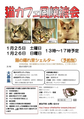 猫カフェ1月