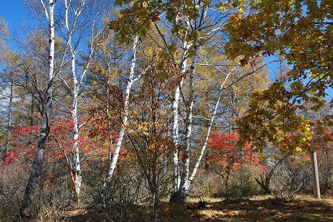 秋色の山頂