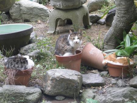 PA090126_convert_20131011143821猫と植木鉢3