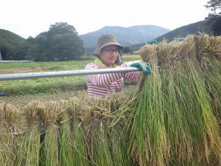 細川農園稲刈り3