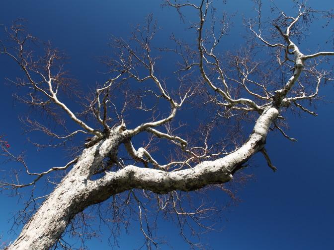 安全祈願の木