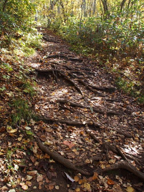 登山道(木の根)