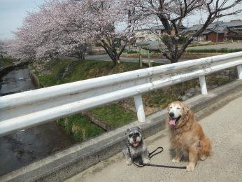 桜とさくらとこなつ