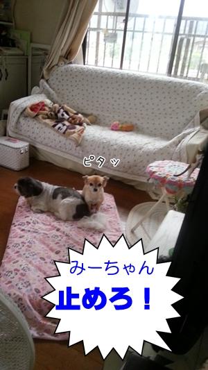 20130907_065001.jpg
