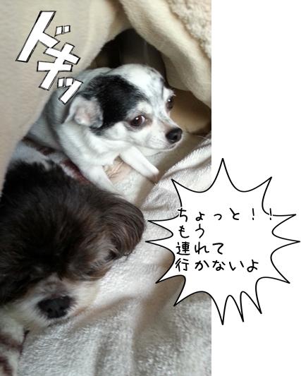 20131027_163514.jpg