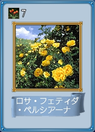 Rosa foetida persiana