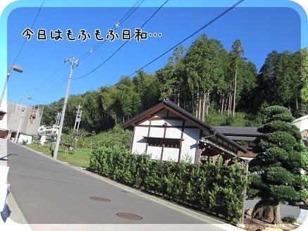 IMG_0005_20130927212300bda.jpg
