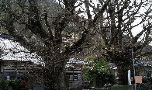 佐渡清水寺3