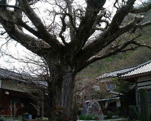 佐渡清水寺4
