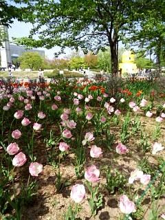 20140503開成山公園(その3)