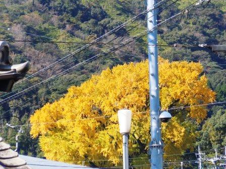 秋色7(2014-11-03)