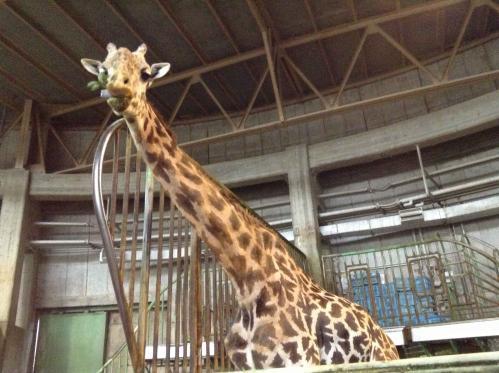 20130414_円山動物園-041