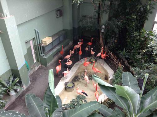 20130414_円山動物園-087