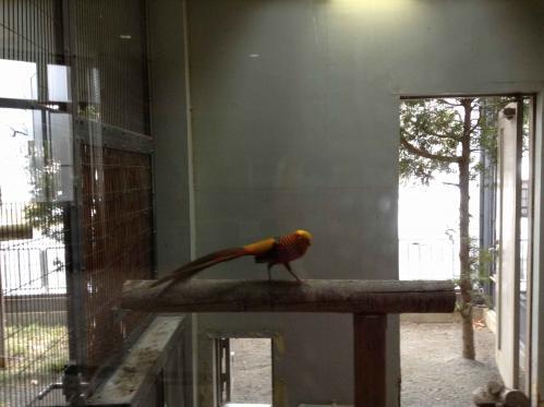20130414_円山動物園-092