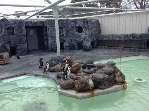 20130414_円山動物園-095
