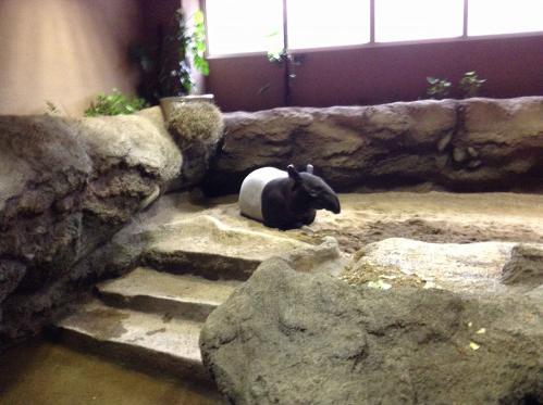 20130414_円山動物園-103