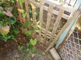 庭のシロアリ被害