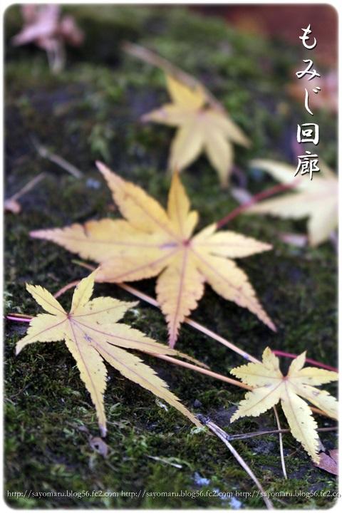 sayomaru11-382.jpg