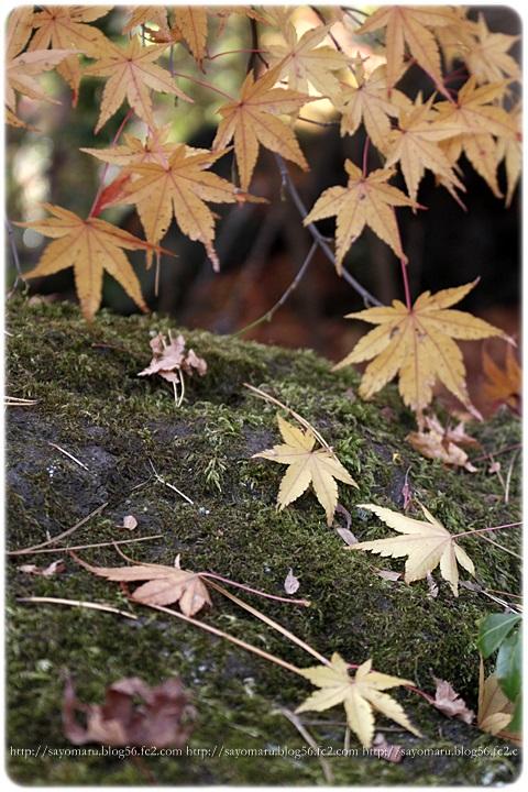 sayomaru11-383.jpg