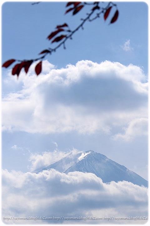 sayomaru11-397b.jpg