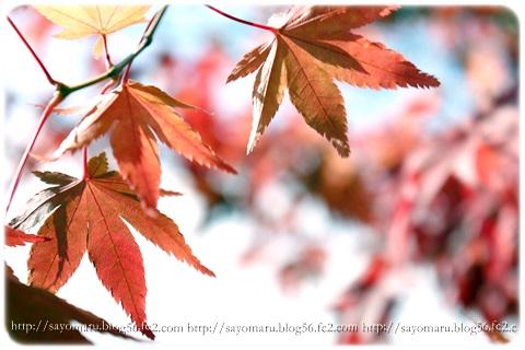 sayomaru11-399.jpg