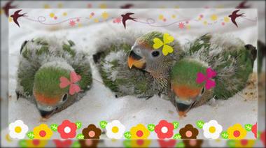鳥や引取り3羽2