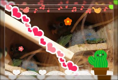 八重桜6月17日生ブログ用
